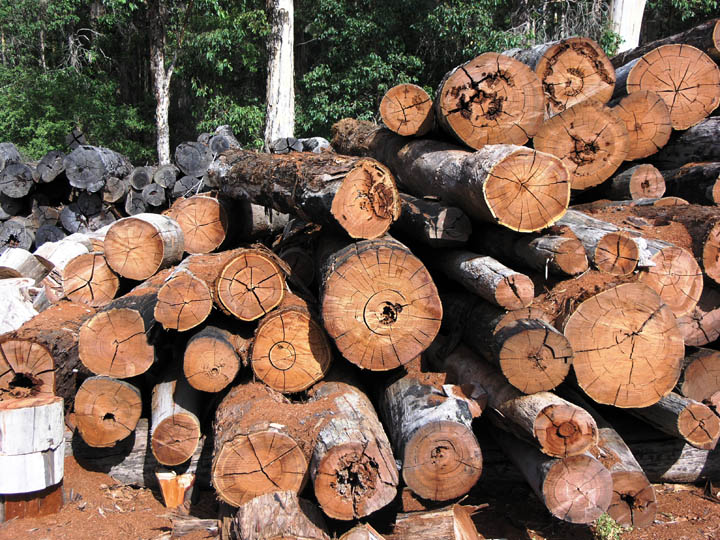 Increasing Timber Prices